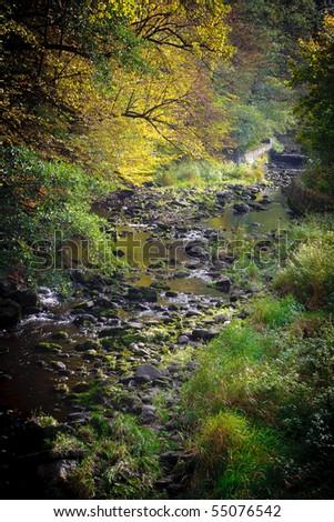 Foggy creek - stock photo