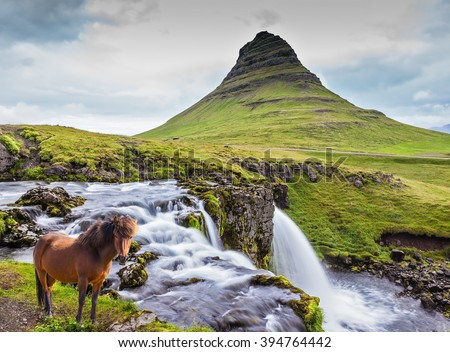 Foggy day in Iceland. On the bank of powerful falls the well-groomed Icelandic horse is grazed
