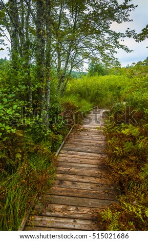 foggy day wooden walking trail wilderness natural park Nova Scotia