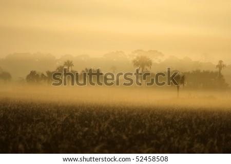 Foggy Everglades Morning - stock photo
