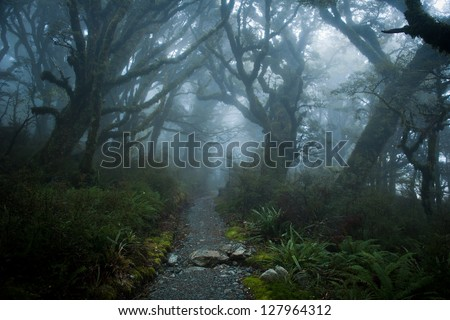 Foggy Forest at Routeburn Track, New Zealand - stock photo