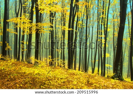 Foggy forest during fall - stock photo