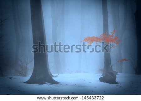 Foggy forest during winter days - stock photo