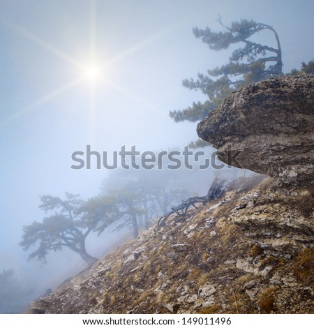 Foggy forest on the rocky hillside with a lonely tree on a stone - stock photo