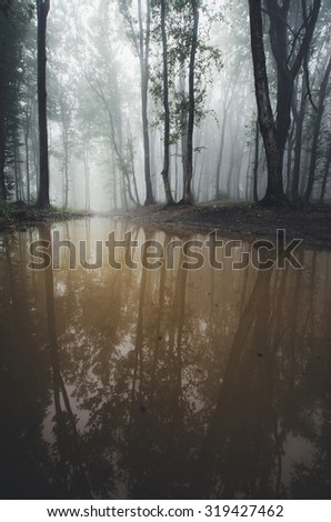 foggy forest reflecting in water - stock photo