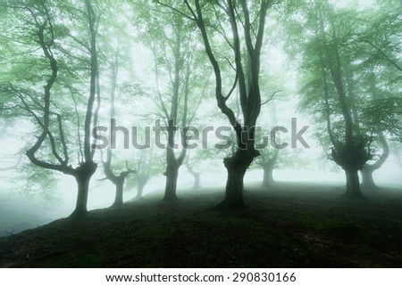 foggy forest with beautiful bright light
