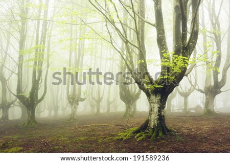 foggy forest with beautiful light