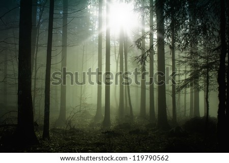 Foggy forest with magic sun light.