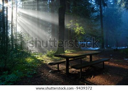 Foggy Forest with sun beam, Lynn Valley Park - stock photo