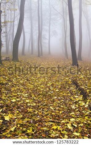 Foggy golden Autumn forest - stock photo