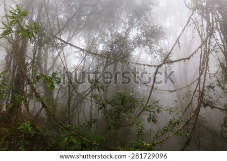 Foggy jungle in the Chiang dao mounts, Thailand - stock photo