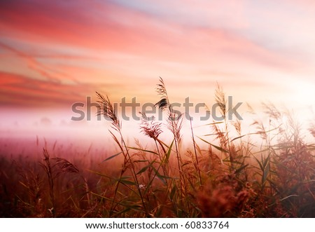 Foggy Landscape.Early Morning Mist. - stock photo