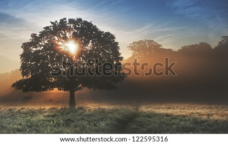 Foggy landscape is lit up at sunrise by sunbeams pouring through frosty landscape - stock photo
