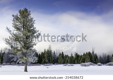 Foggy misty winter field and mountain - stock photo