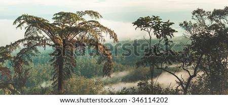 Foggy morning at Horton Plains. Fern on the foreground. Panorama - stock photo