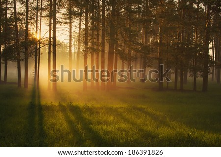 Foggy morning in a forest - stock photo