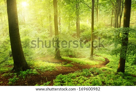Foggy morning in a green summer forest in Germany - stock photo