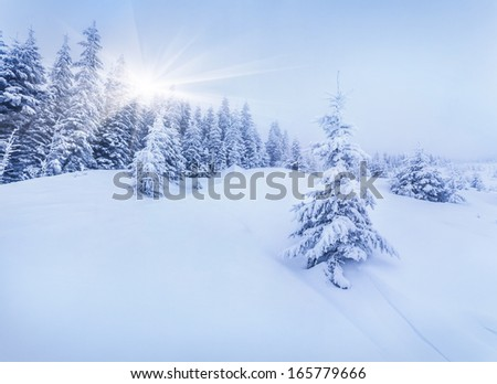 Foggy morning in a winter forest - stock photo