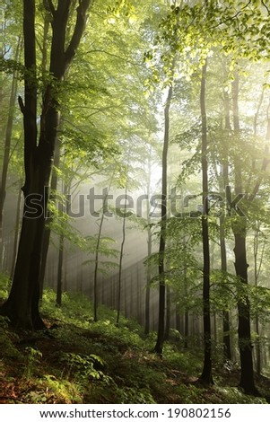 Foggy morning in spring forest on a mountain slope after rainfall. - stock photo