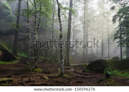 Foggy morning in the deep forest - stock photo