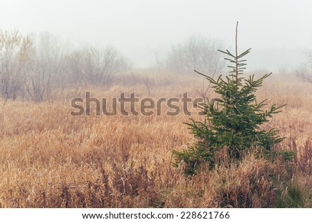 Foggy morning in the fall landscape of rural Prince Edward Island, Canada. - stock photo