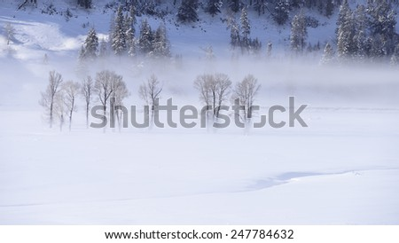 Foggy morning in Yellowstone National Park - stock photo