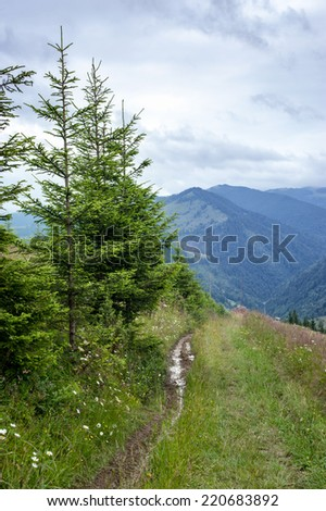 Foggy morning landscape with highland forest at Carpathian mountains. Ukraine destinations and travel background - stock photo
