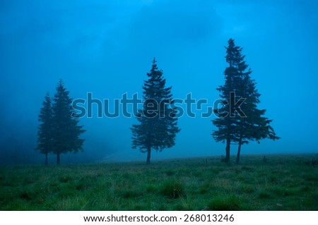 Foggy morning landscape with pine tree highland forest. Travel background. - stock photo