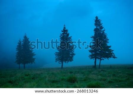Foggy morning landscape with pine tree highland forest. Travel background. - stock photo