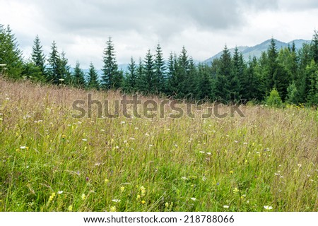 Foggy morning landscape with summer meadow and pine tree highland forest at Carpathian mountains. Ukraine destinations and travel background - stock photo