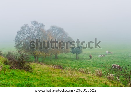 Foggy morning over cow pasture - stock photo