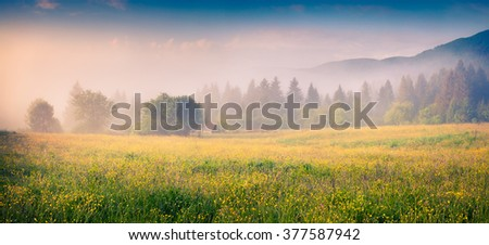 Foggy morning scene in a mountain valley. Fresh grass and flowers in a morning dew. Sunrise in Carpathians, Ukraine, Europe.