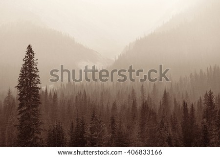 Foggy mountain forest in Banff National Park. - stock photo