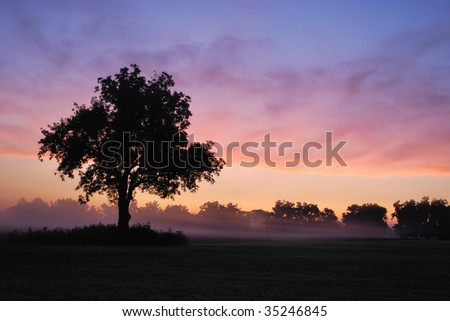 Foggy Oklahoma Morning - stock photo