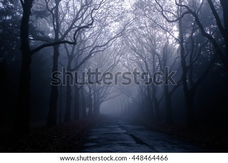 foggy road in forest
