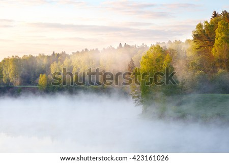 Foggy summer morning with birdsong - stock photo