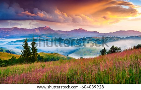 Foggy Summer Sunrise Carpathian Mountains Colorful Stock
