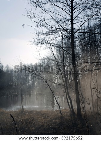 Foggy swamps in autumn. Cool dark lake in primeval forest. Cold melancholic landscape with water vapour. Mystery and mystic wetland with trees. Enigmatic mysterious dark swamp. Eeerie situation marsch