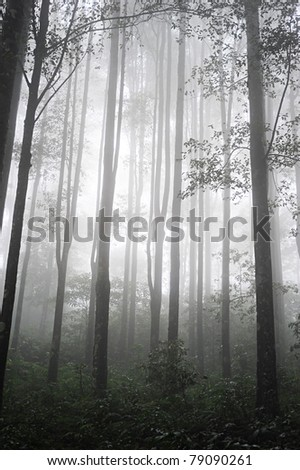 Foggy Tropical forest in the evening . Bali, Indonesia - stock photo