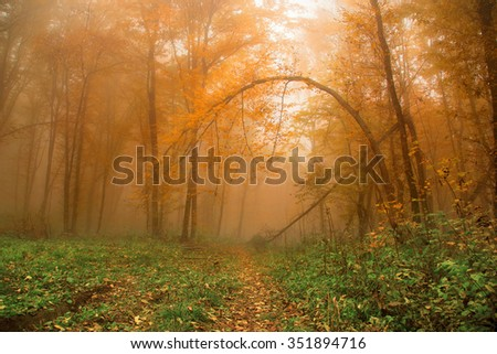 fogy forrest - stock photo