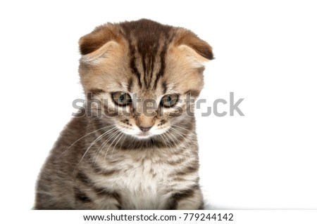 Folding cat isolated on the white