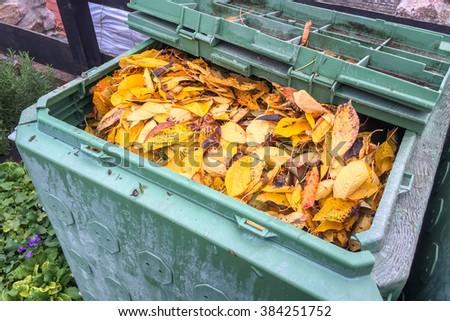 Foliage, Autumn, compost - stock photo
