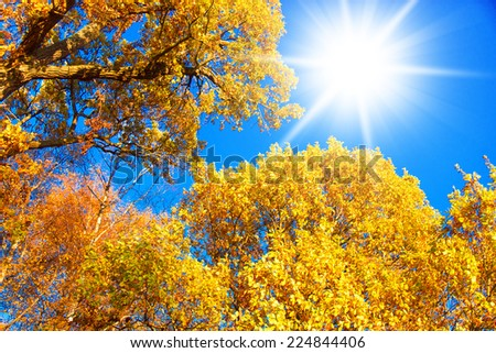 Foliage Beams Yellow Trees  - stock photo