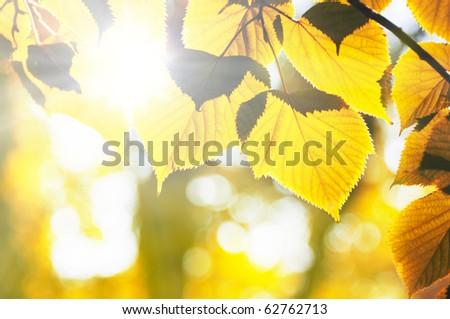 foliage illuminated sun - stock photo
