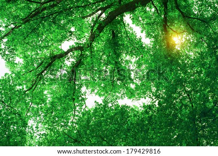 Foliage in deciduous forest - stock photo