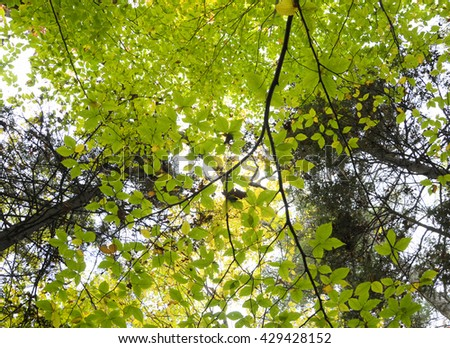 Foliage in Vermont, USA - stock photo