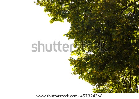 Foliage isolated on a white background