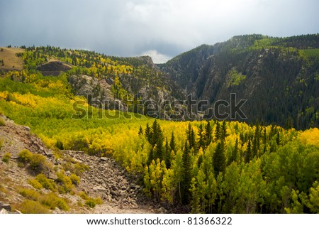 Foliage Near the Colorado and New Mexico Border - stock photo