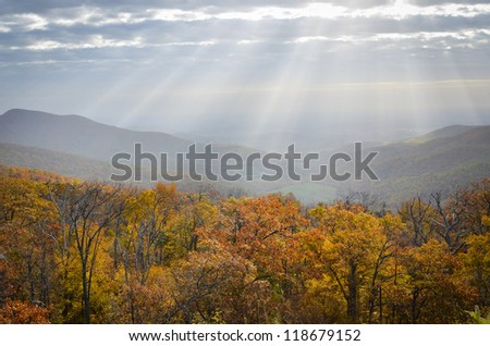 Foliage of autumn forest in Shenandoah Valley in Virginia, United States - stock photo