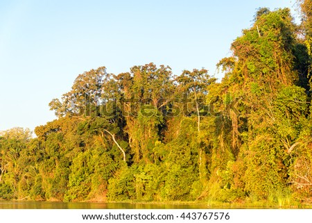 Foliage of the Amazon rainforest bathed in golden light at sunset in Madidi National Park in Bolivia - stock photo